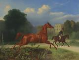 """Арт-студия """"Кентавр"""" - Придворный художник немецкого короля Вильгельма I, австрийского императора Франца Иосифа I - Престель Иоганн Эрдман Готтлиб (1804-1885) - """"Убегающая лошадь"""" №011228"""