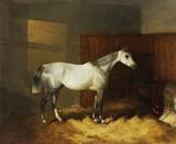 "Арт-студия ""Кентавр"" - Шайер Уильям Джозеф (младший) (1811-1892)- ""Лошадь в конюшне"" №012921"