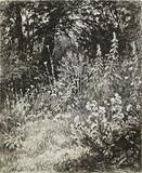 """Арт-студия """"Кентавр"""" - """"Лесные цветы"""" (из альбома """"25 гравюр на меди И.И.Шишкина"""") №015126"""